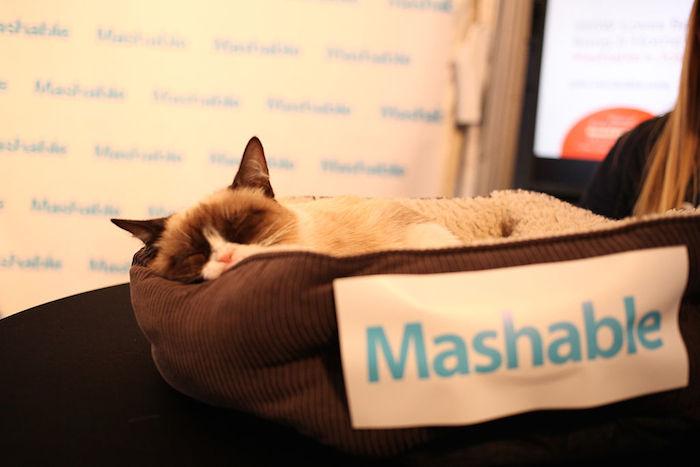 Mashable_GrumpyCat-cc