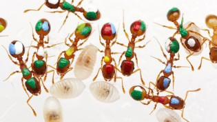 alex-wild-ants