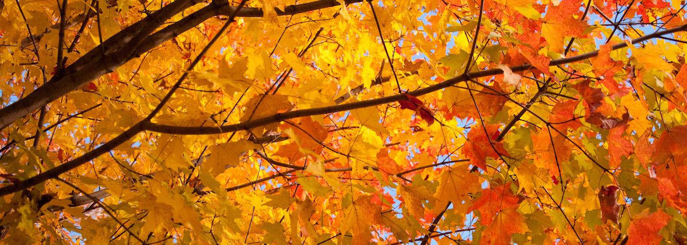 fall-autumn-leaves-cc