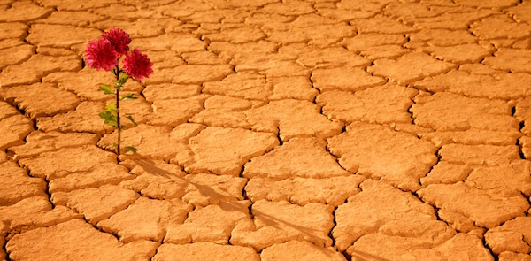 good-news-flower-wasteland-desert-happy