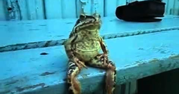 Gawker: We want to elevate the discourse about frogs who sit like ...