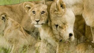 lion-conference-cc