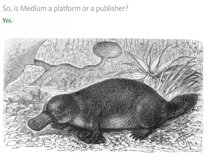medium platform or publisher