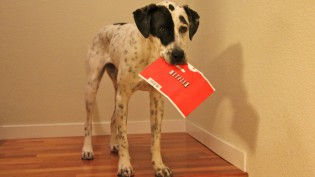 netflix-comcast-dog-cc