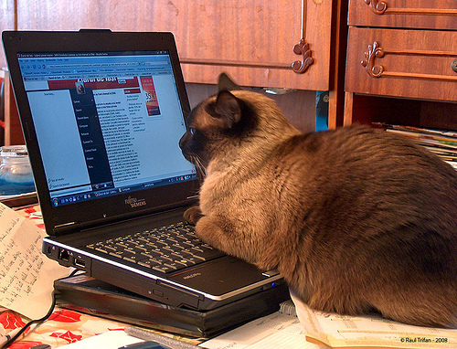 network privacy online responsibility the miscellany cat online 500x382