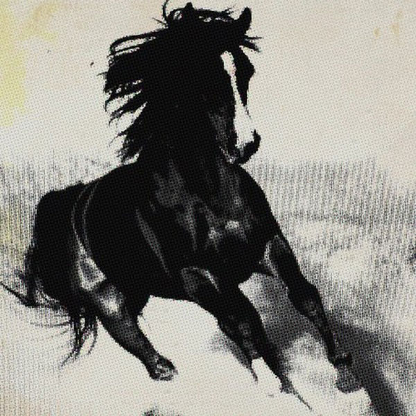 Horse with jaunty gallop