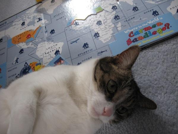 carmen sandiego, cat